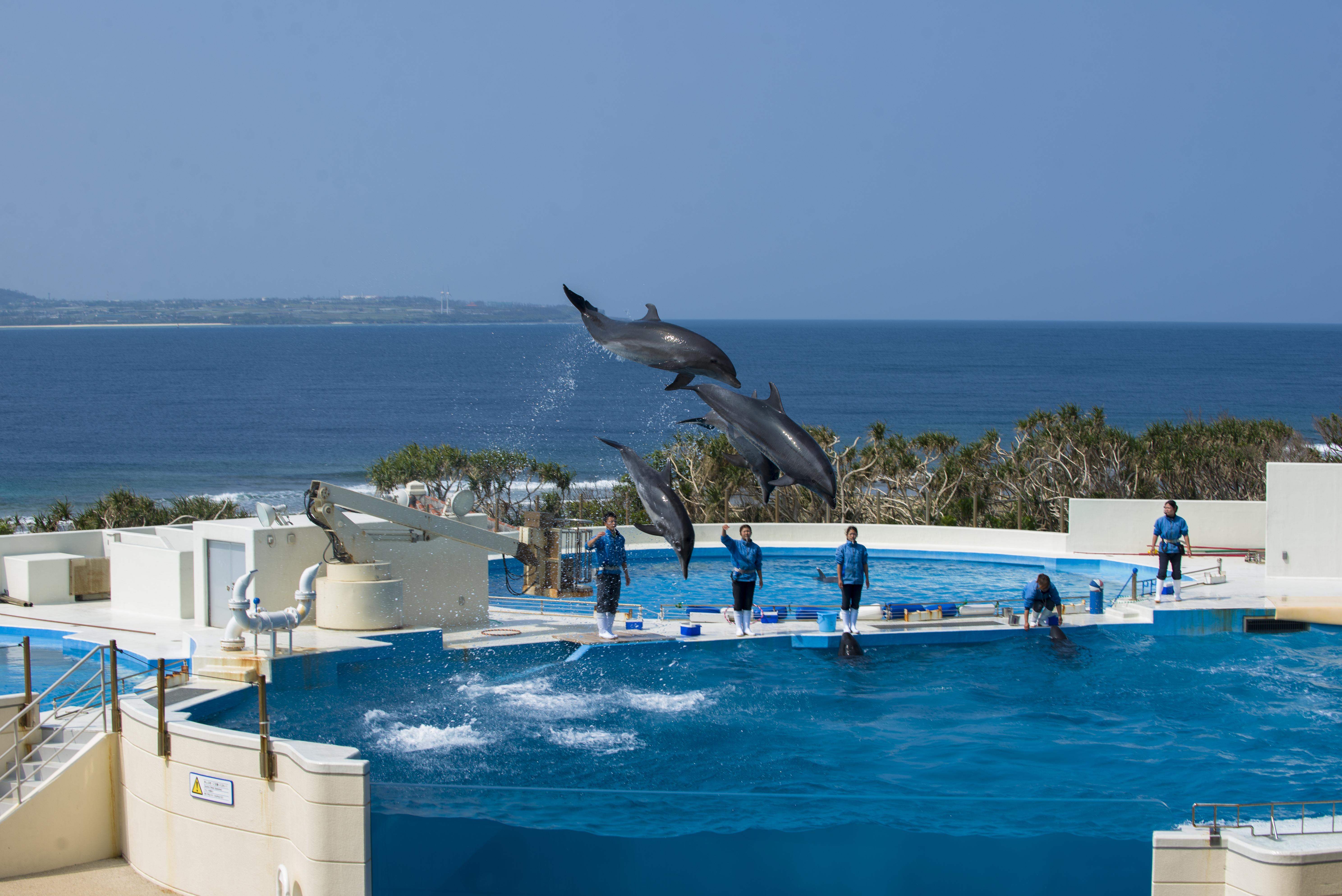 Ocean Expo Park
